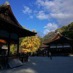 世界遺産 下鴨神社 舞殿からの銀杏の木