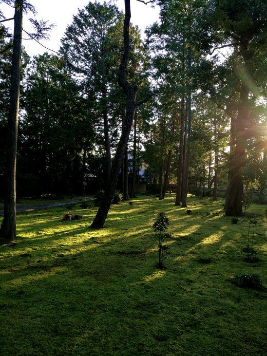 大徳寺の南門よこの庭