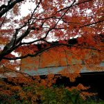大徳寺の紅葉グラデーションがきれい 2018