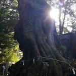 來宮神社 天然記念物の大楠 静岡県熱海市