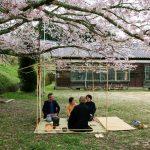 廃校小学校で花見茶会 2016年4月 京都
