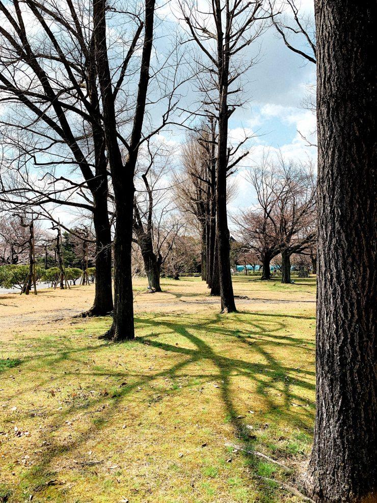 二条城の木の影