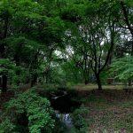 第29回糺の森 市民植樹祭 参列