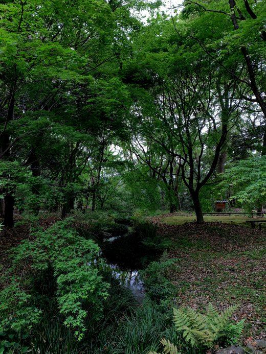 糺の森 市民植樹祭