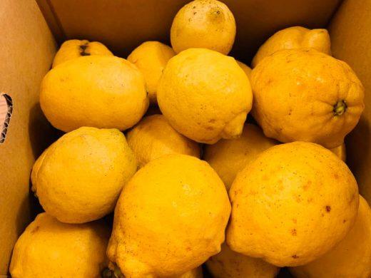 国産レモン訳あり