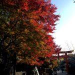 下鴨神社 西の参道から見た紅葉