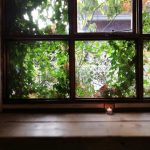 西向きの窓に植物を 木漏れ日を楽しむ