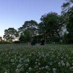 鴨川沿いの花畑(白詰草:Trifolium repens)茶会