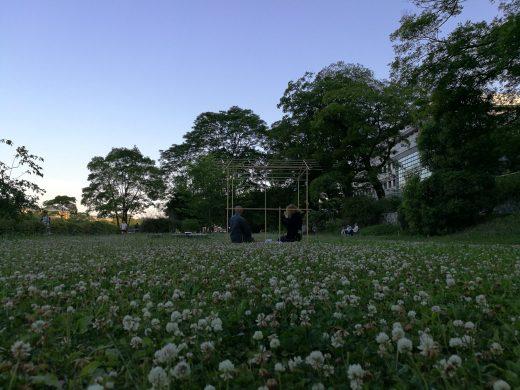 鴨川沿いの花畑(白詰草:Trifolium repens)茶会 2017年6月 京都
