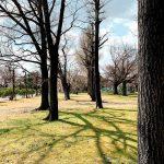二条城の木の影 茶会の下見